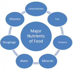 Major Nutrients of Food