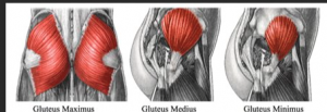 Glute types